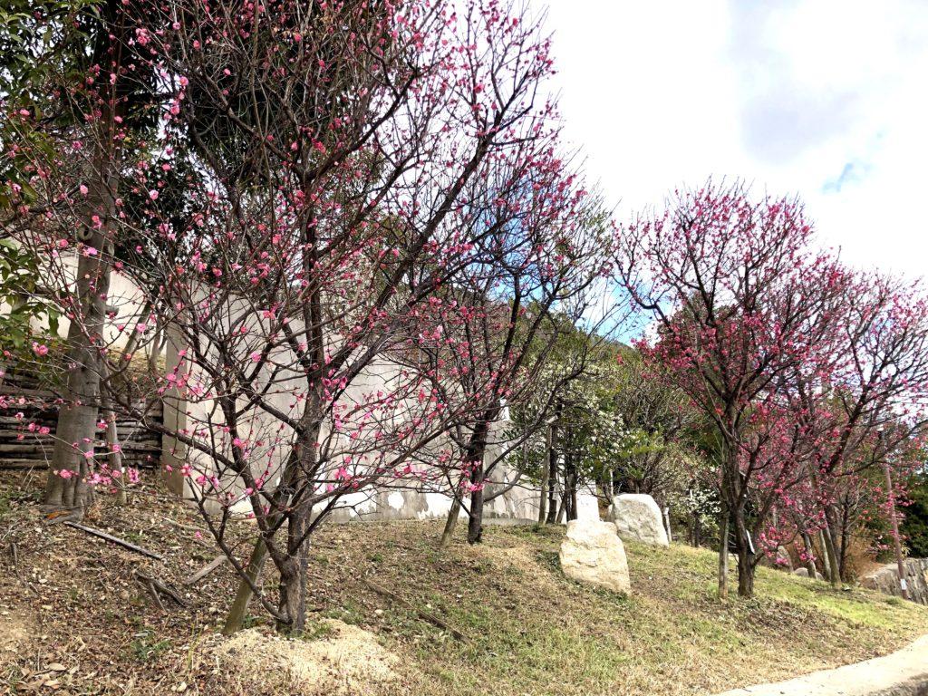 岡本梅林公園05