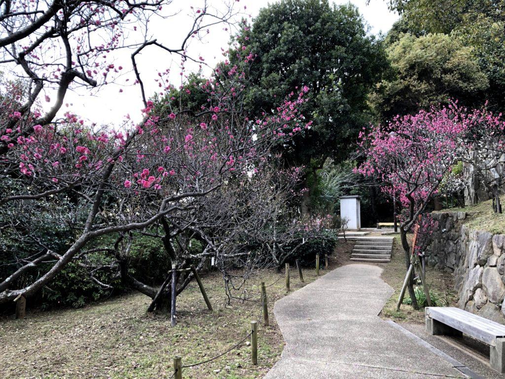 岡本梅林公園11