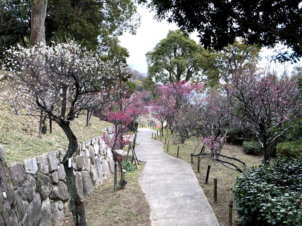 岡本梅林公園12