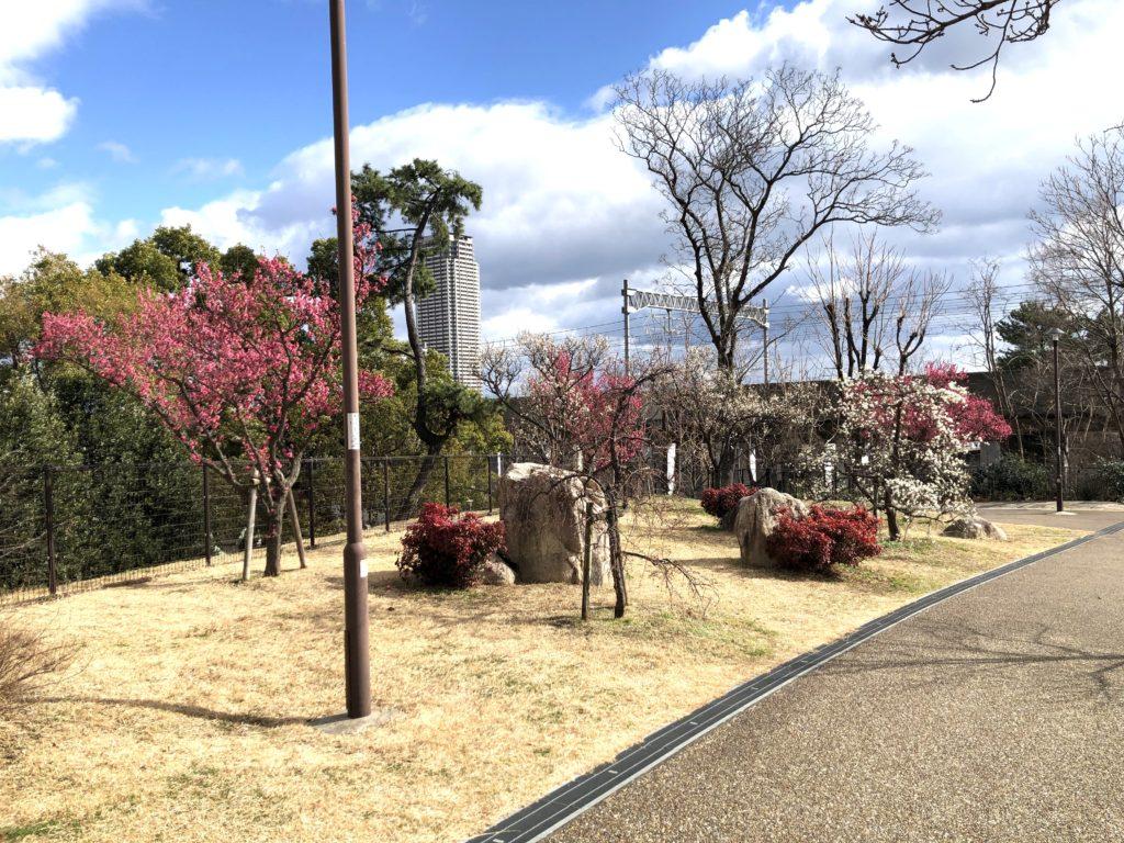 石屋川公園15